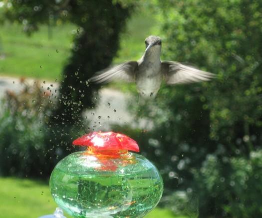 hummer hovering