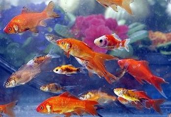 Pisces 'stellium'
