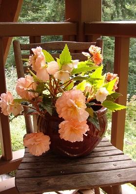 Begonias.  © Pat Paquette, 2015.