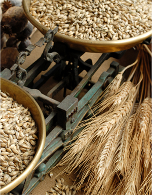 Weighing the Harvest. © Mafoto for Dreamstime.com
