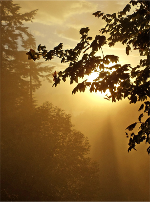 Sun and Fog. © Pat Paquette, 2013.