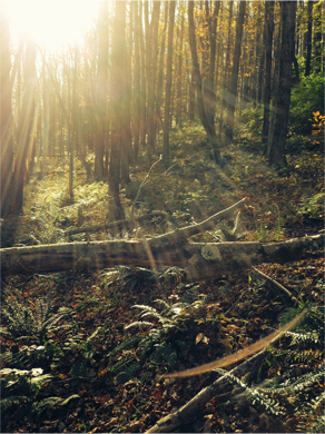 Deep woods. © Osk Ingad Alden, 2013.