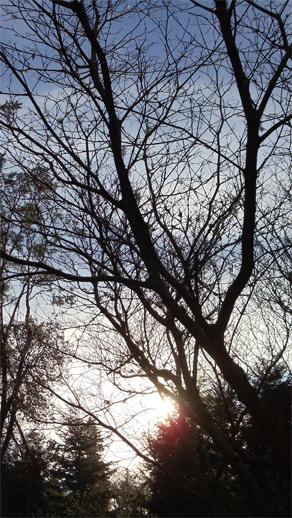 Late fall sun. © Pat Paquette, 2013.