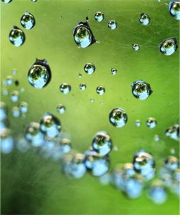 Droplets. © Gretchen Friedrich, 2014.