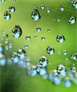Droplets. © Gretchen Friedrich, 2014.
