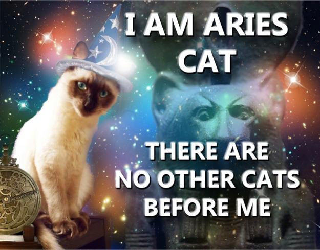 7-Aries Cat