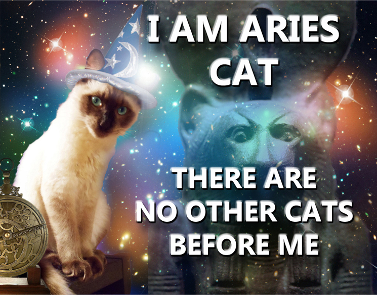 Astrology Cat Is an Aries | RealAstrologers